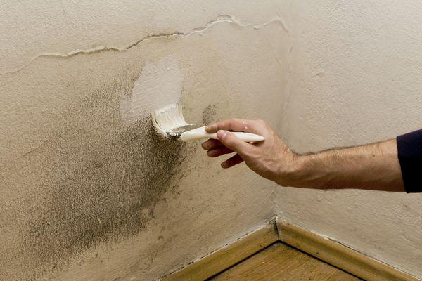 Damp Paint Mould