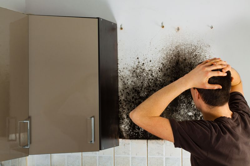 damp and mould solutions